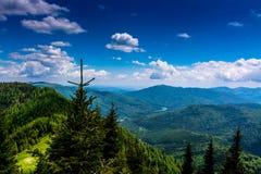 Mountain Landscape. With fir trees, Ciucas, Romania Stock Photos