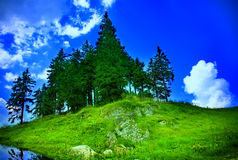 Mountain landscape - fir trees, grass and sky Royalty Free Stock Photo