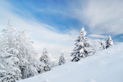 Mountain landscape with fir trees on slope Stock Photography