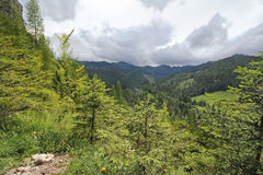 Mountain landscape with fir trees. View from Mount Nosal, Tatry, Poland. Sunny summer day. Landscape with fir trees and mountain ranges in the pile. View from stock photos