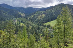 Mountain landscape with fir-trees. View from Mount Nosal, Tatry, Poland. Sunny summer day. Landscape with fir trees and mountain ranges in the pile. View from royalty free stock photography