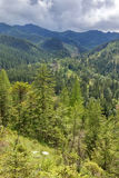 Mountain landscape with fir trees. View from Mount Nosal, Tatry, Poland. Sunny summer day. Landscape with fir trees and mountain ranges in the pile. View from royalty free stock photography