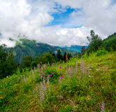 Mountain landscape with flowers on foreground in Svaneti Royalty Free Stock Photography