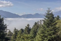 Mountain landscape with fog and spruce stock images