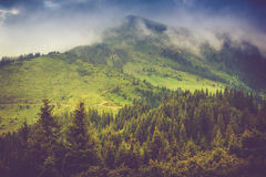 Mountain landscape and forests tops covered with mist. Dramatic overcast sky. Stock Image
