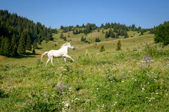 Mountain landscape with galloping white horse Royalty Free Stock Image
