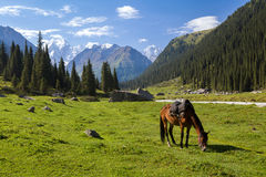 Mountain landscape with grazing horse Royalty Free Stock Image
