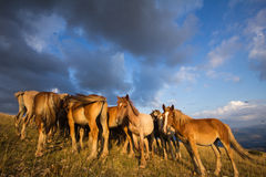 Mountain landscape with grazing horses Royalty Free Stock Photos