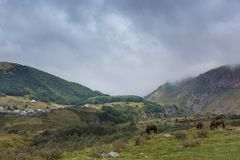 Mountain landscape with grazing horses. In Georgia Royalty Free Stock Photography