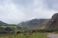 Mountain landscape with grazing horses. In Georgia Stock Image
