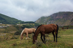 Mountain landscape with grazing horses. In Georgia Royalty Free Stock Photos