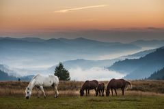 Mountain landscape with grazing horses Stock Images