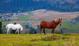 Mountain landscape with grazing horses Royalty Free Stock Images