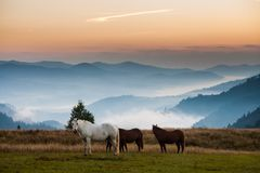 Mountain landscape with grazing horses Stock Photos