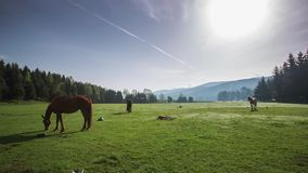 The Mountain landscape with grazing horses stock video footage