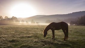 The Mountain landscape with grazing horses stock footage