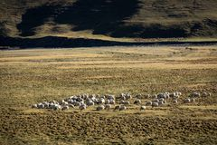Mountain landscape with grazing sheep. Royalty Free Stock Photography