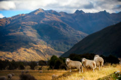 Mountain landscape with grazing sheep Stock Photo