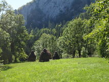 Mountain landscape Green meadow Royalty Free Stock Photography