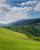 Mountain landscape with green meadow and pine forest away Royalty Free Stock Photo