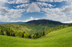 Mountain landscape with green meadow and pine forest away Stock Photography
