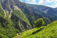 Mountain landscape with green tree on the hill Stock Photography