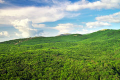 Mountain landscape with green trees. Royalty Free Stock Image