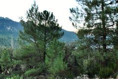 Mountain landscape with green vegetation in winter. In Riopar, Albacete province, Castilla la Mancha, Spain stock photography
