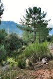 Mountain landscape with green vegetation in winter. In Riopar, Albacete province, Castilla la Mancha, Spain stock photos