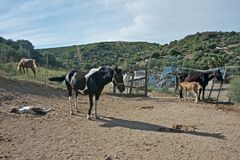 Mountain landscape with a group of horses stock photos