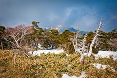 Mountain landscape at Hallasan royalty free stock photos
