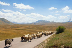 Mountain landscape with a herd of sheep walking along the road and windmills on the background. Montenegro, Krnovo wind park Royalty Free Stock Images