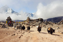 Mountain landscape of the Himalayas. Yaks on the pass. East Nepal Stock Images