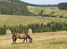 Mountain landscape with a horse Royalty Free Stock Photos