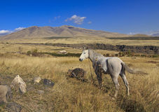 Mountain landscape with a horse Stock Image
