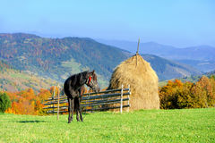 Mountain landscape with the horse Stock Photo