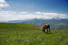 Mountain landscape with a horse Royalty Free Stock Image