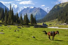 Mountain landscape with horse Royalty Free Stock Images