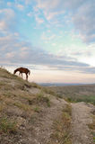 Mountain landscape with horses. And the beautiful sky Stock Photos