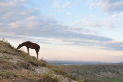 Mountain landscape with horses. And the beautiful sky Stock Images