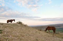Mountain landscape with horses. And the beautiful sky Stock Photo