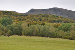 Mountain landscape and horses Stock Photography