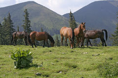 Mountain landscape with horses. Mountain landscape and horses stock photo