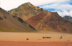 Mountain landscape with horses in front, Argentina Royalty Free Stock Photo