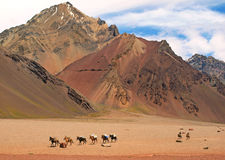 Mountain landscape with horses in front, Argentina. Beautiful mountain landscape with group of horses in front as seen in the wilderness of Argentina, South royalty free stock photo