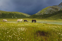 Mountain landscape with horses Stock Photo