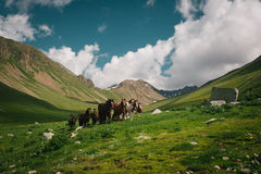 Mountain landscape with horses. Royalty Free Stock Image