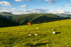 Mountain landscape with horses Royalty Free Stock Photo