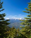 Mountain Landscape. Hurricane Ridge, Olympic National Park, Washington, USA Stock Photos