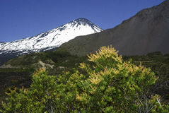 Generic vegetation and Antuco volcano Stock Images